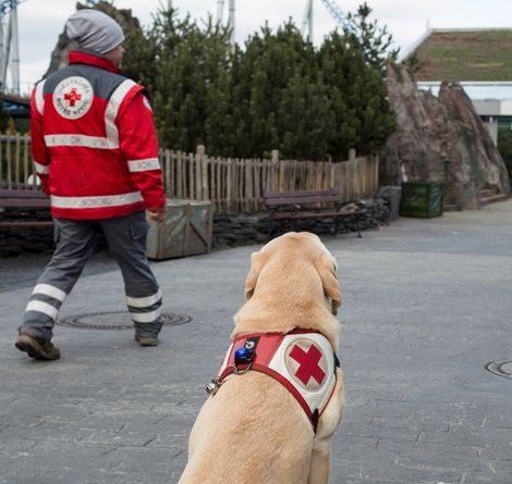 Der erfahrene Rüde Magnus lässt sich anzeigen, in welche Richtung er suchen soll. Bild © DRK Rettungshundestaffel Freiburg