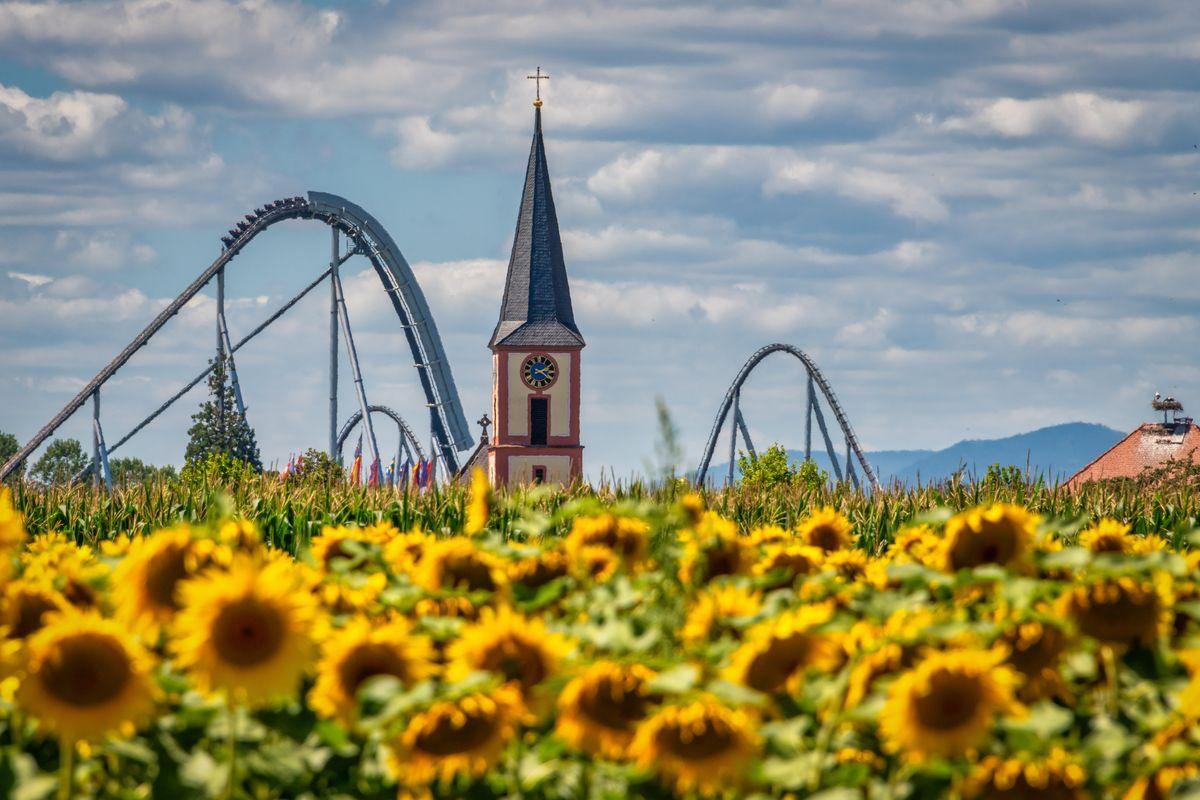 Perfektes Sommermotiv - Sonnenblumen, die Stahlachterbahn Silver Star und der Kirchturm der Gemeinde Rust. Bild: Europa-Park