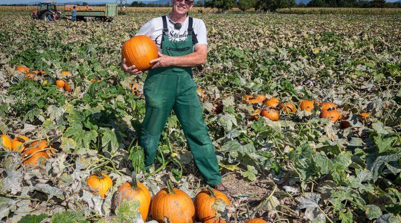 Landwirt Peter Rauer liefert seit 25 Jahren Kürbisse an den Europa-Park. Bild: Europa-Park