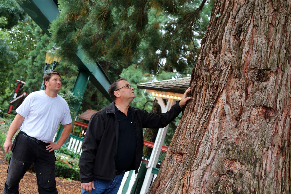 Der Mammutbaum im Europa-Park ist über 150 Jahre alt. Bild: Europa-Park